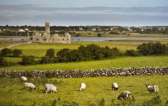 Immersion en famille en Irlande